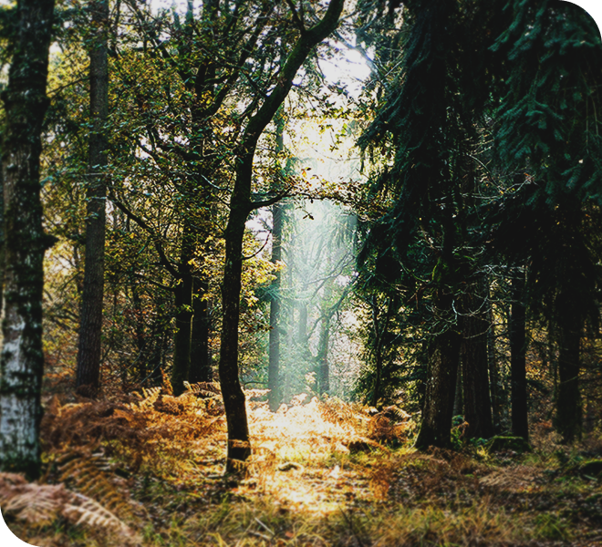 The forest in fall