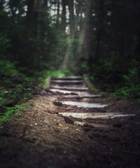 Image of trail in forest