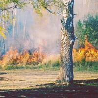 wildland-fire.jpg